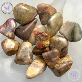 Petrified Wood Tumble Stone